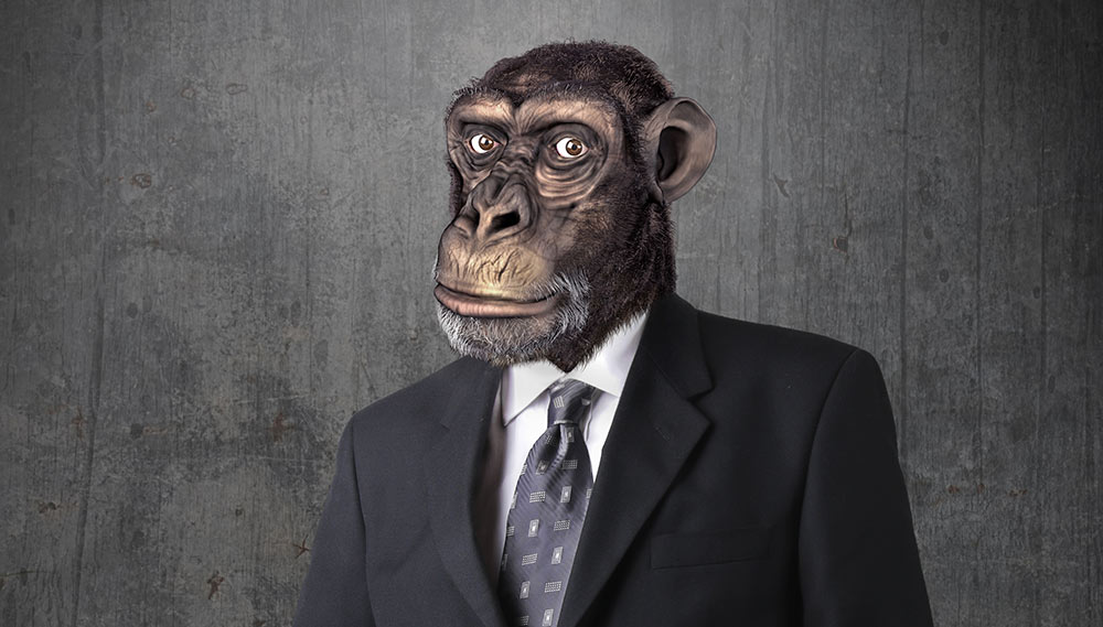 Monkey Around with Propertt Management